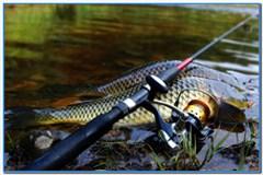 Карповая рыбалка в наши дни.