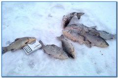Рыбалка зимой на карася.