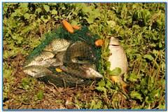 Отчет о рыбалке 21 июля 2012г., на платном водоеме Плота.