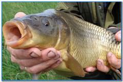 Рыбалка в Запольном, два загадочных дня.