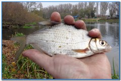И вновь рыбалка на леща.
