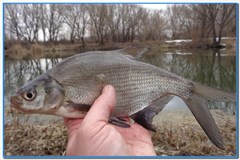 Очередная рыбалка на реке Оскол.