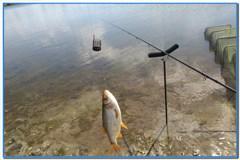 Разведка – Рыбалка на деревенском пруду.