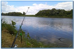 Фидерная рыбалка на Дону в июле.